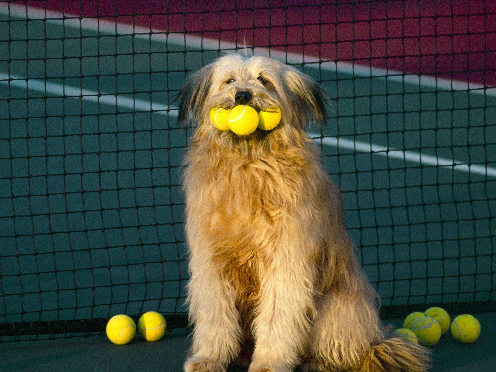 des-chiens-vraiment-supers_photographies_01