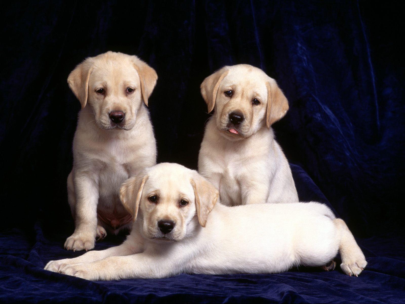 des-chiens-vraiment-supers_photographies_03