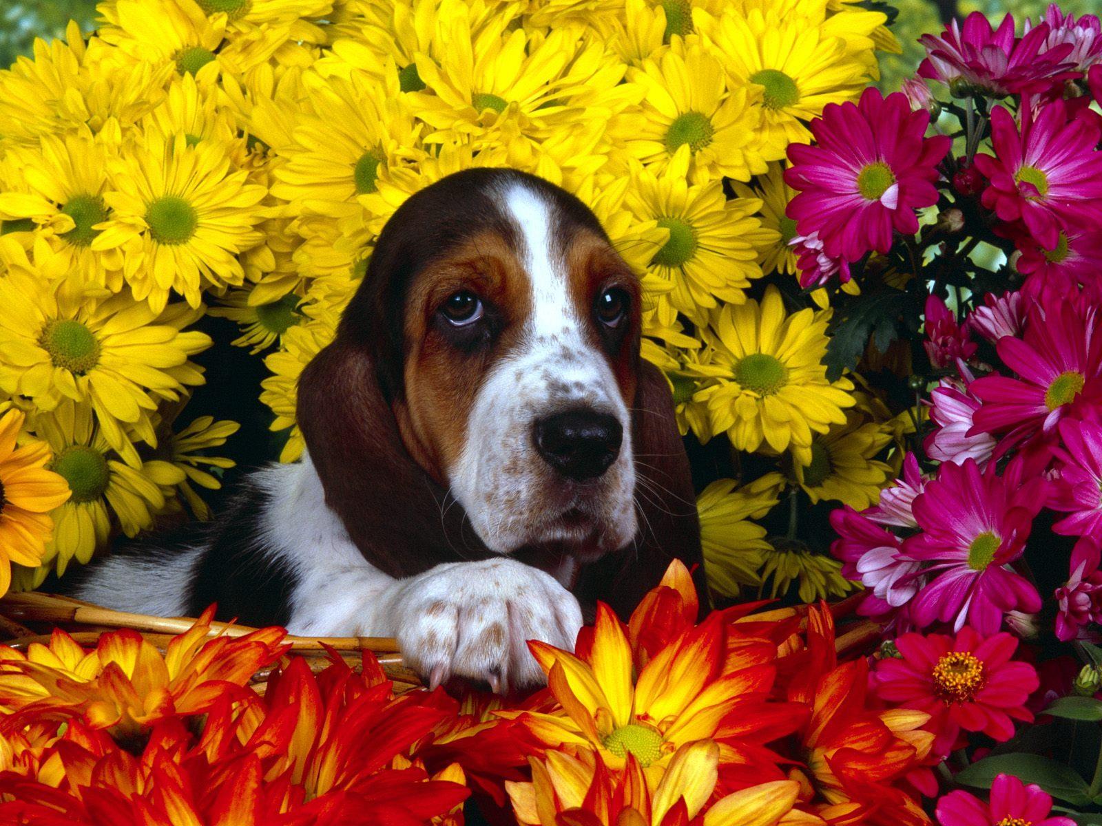 des-chiens-vraiment-supers_photographies_08