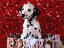 des-chiens-vraiment-supers_photographies_10