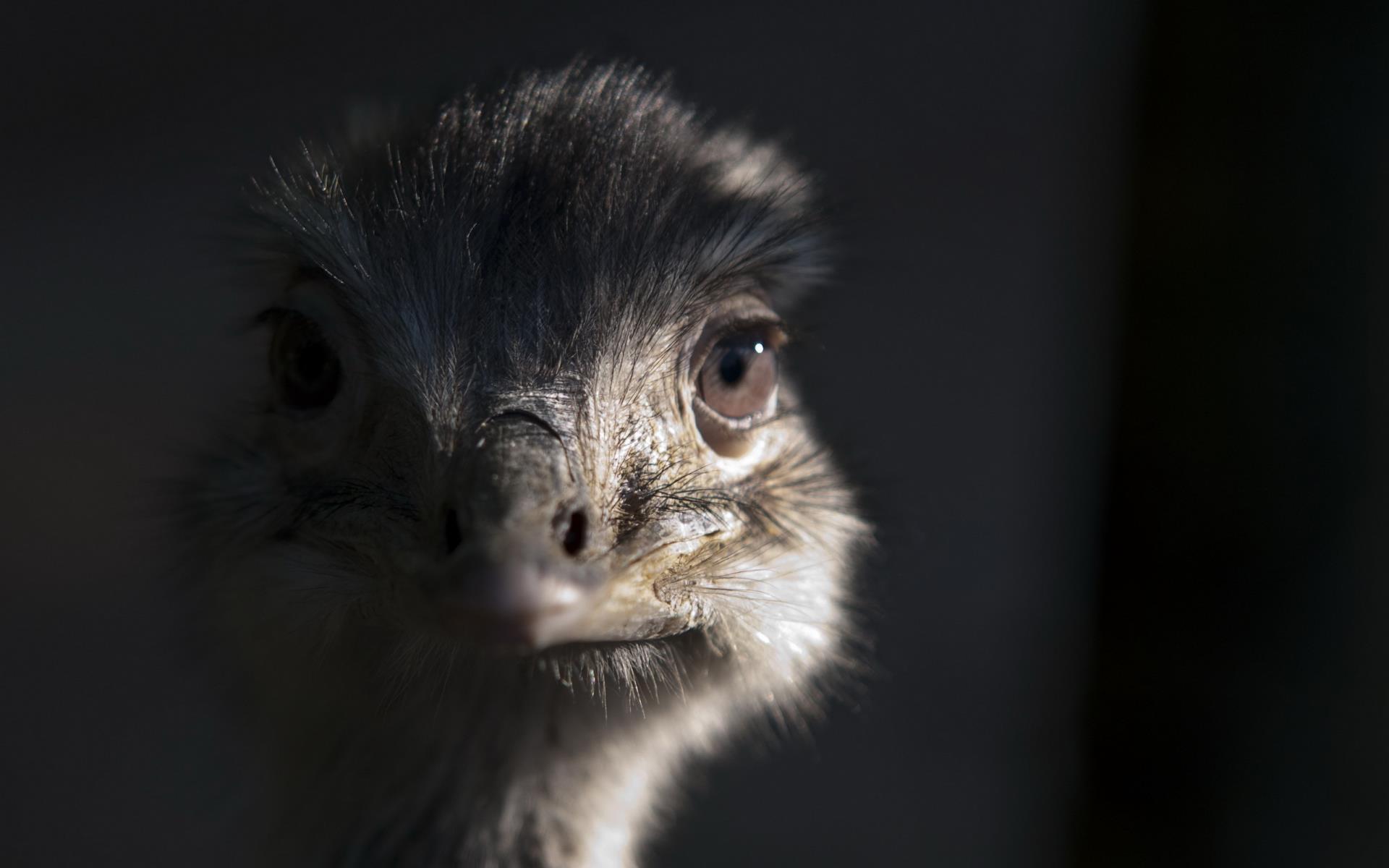 oiseaux-du-monde-en-images-et-fonds-ecran_01