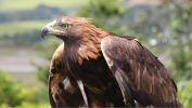 oiseaux-du-monde-en-images-et-fonds-ecran_02
