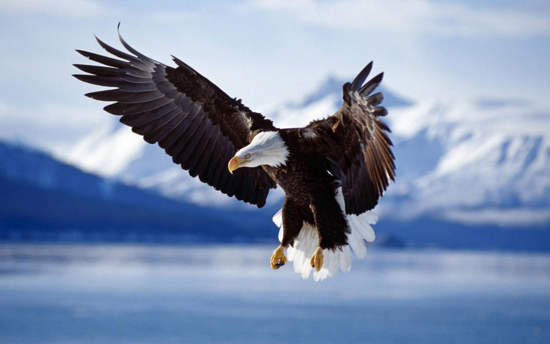 oiseaux-du-monde-en-images-et-fonds-ecran_03