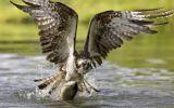 oiseaux-du-monde-en-images-et-fonds-ecran_05