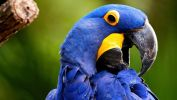 oiseaux-du-monde-en-images-et-fonds-ecran_06