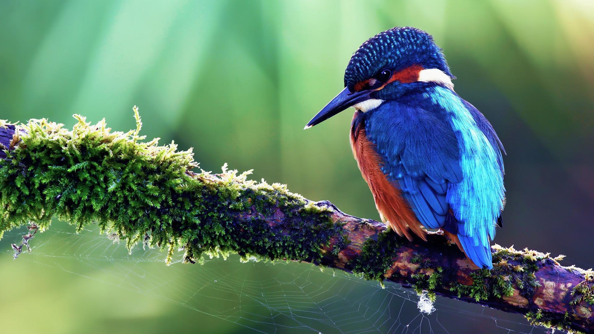 Des Oiseaux Fond D Ecran Et Photos A Telecharger Serie