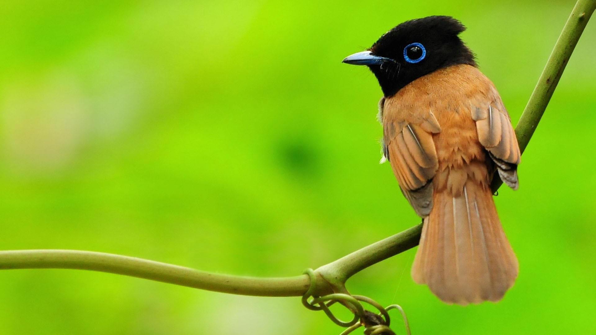 oiseaux-du-monde-en-images-et-fonds-ecran_08