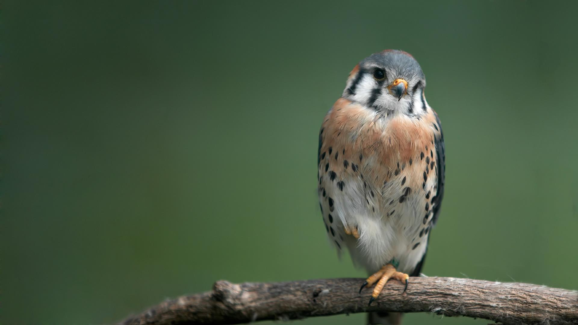 oiseaux-du-monde-en-images-et-fonds-ecran_09