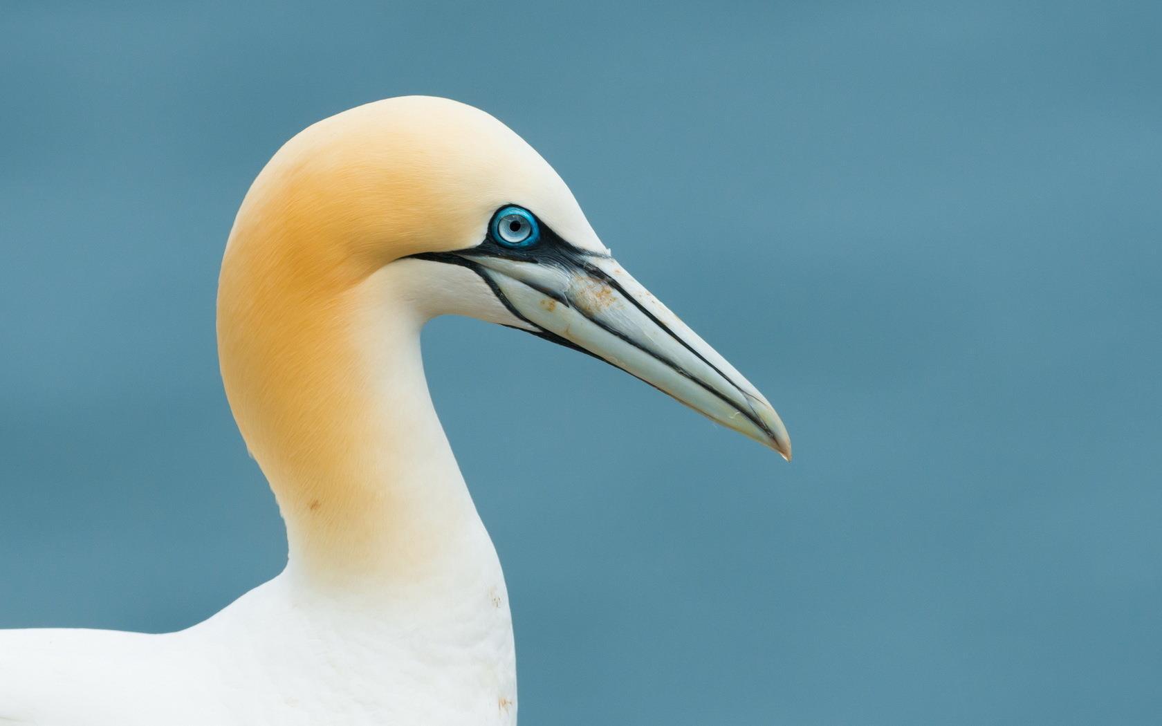 oiseaux-du-monde-en-images-et-fonds-ecran_10