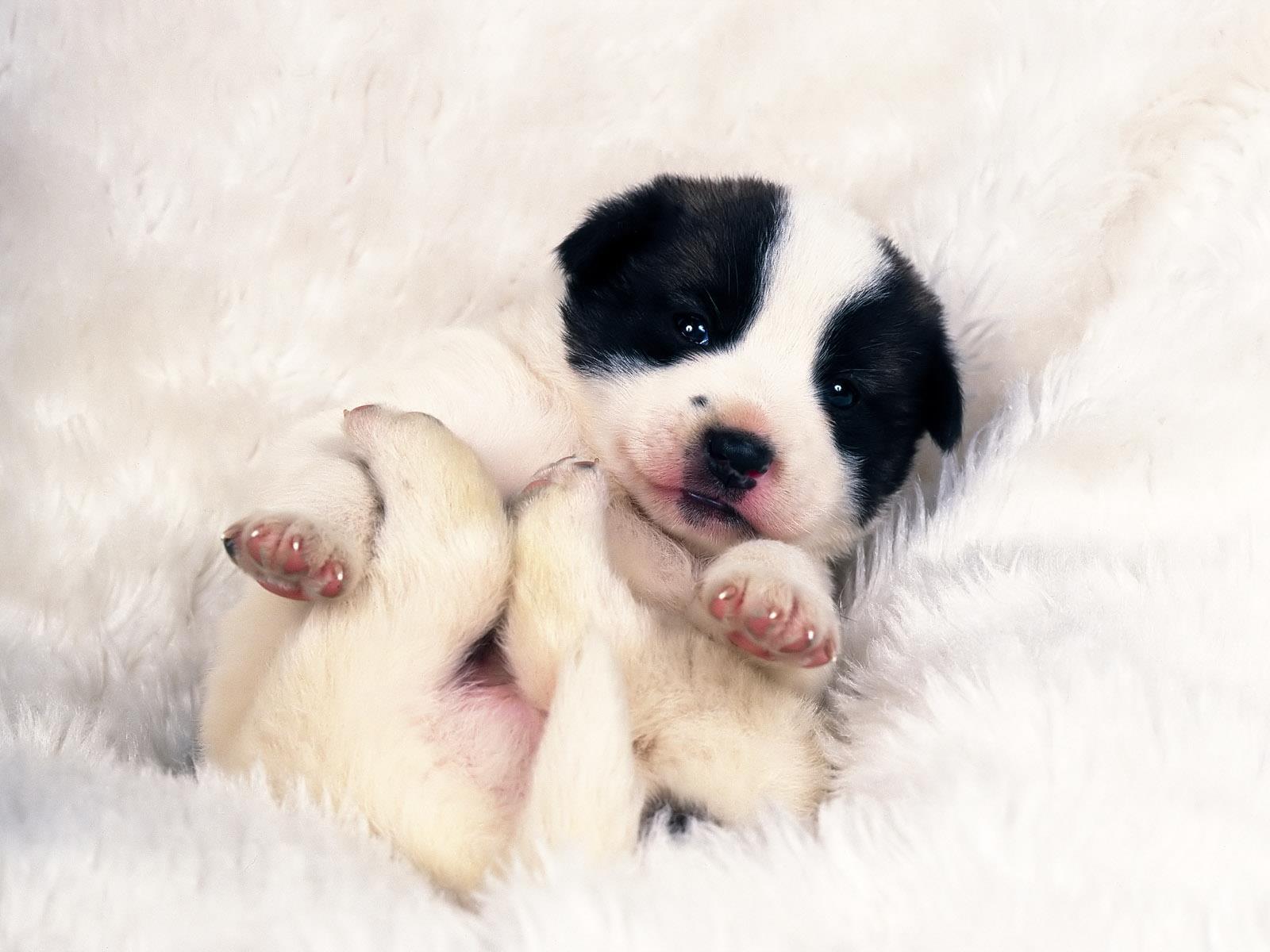 adopter-un-chiot-mignon-gratuit-5