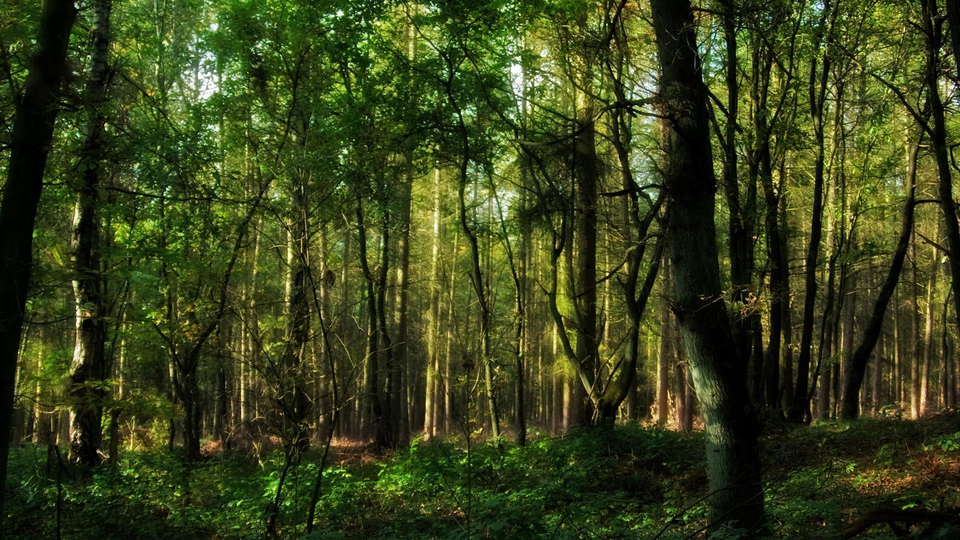 HD-fond-ecran-widescreen-arbres-couleurs-de-la-foret-2