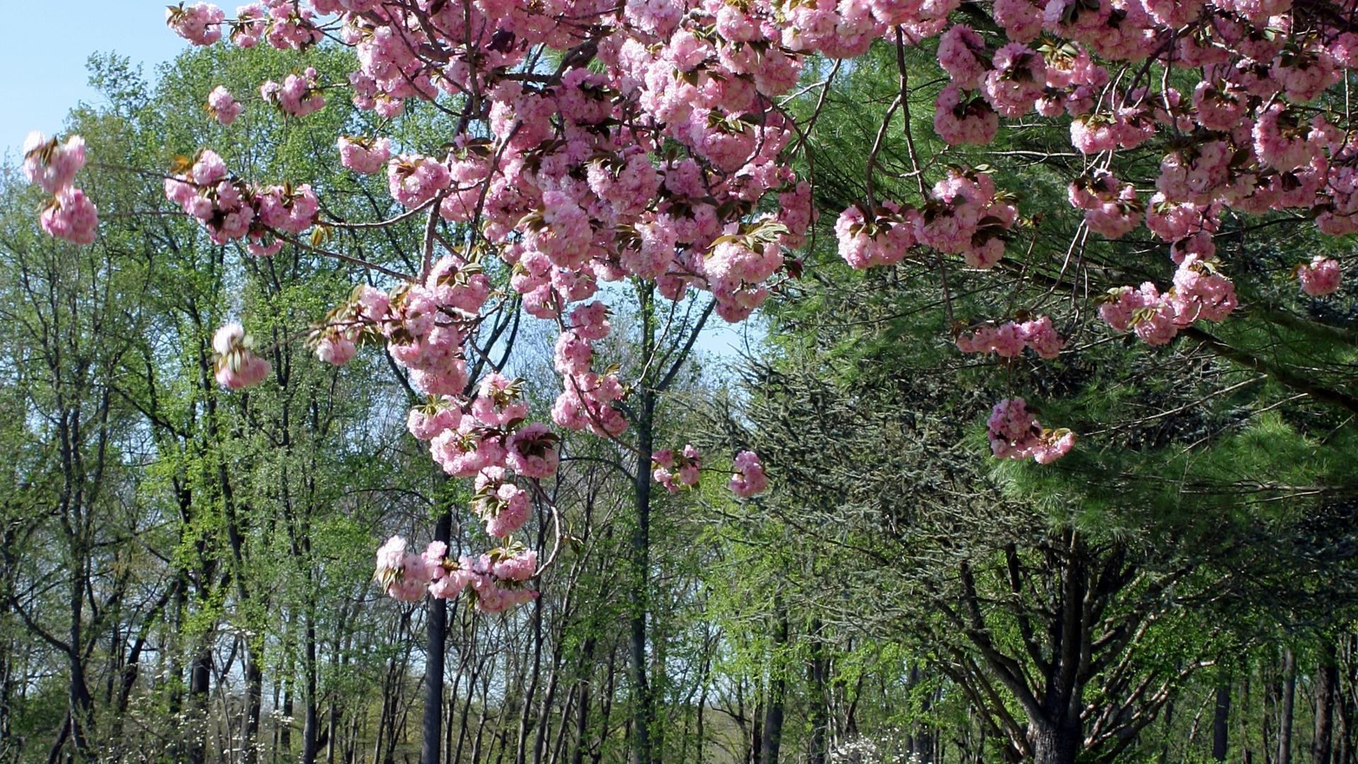 HD-fond-ecran-widescreen-arbres-couleurs-de-la-foret-3