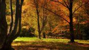 fond-ecran-widescreen-arbres-foret-1