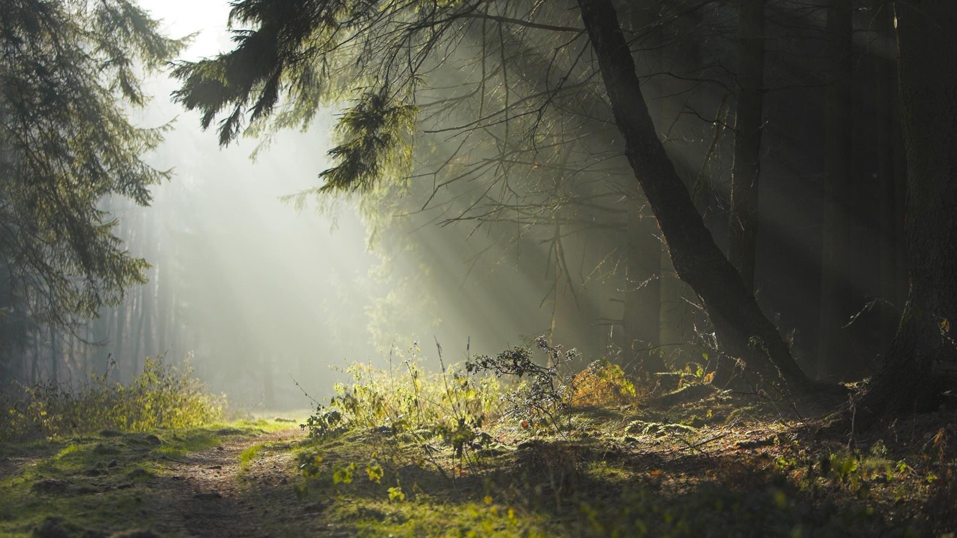fond-ecran-widescreen-arbres-foret-2