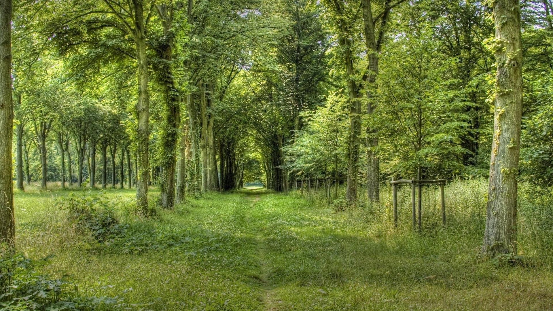 fond-ecran-widescreen-arbres-foret-3