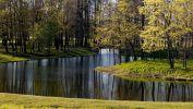 fond-ecran-widescreen-arbres-foret-4