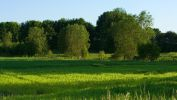 image-et-fonds-ecran-widescreen-arbres-telechargement-gratuit-1