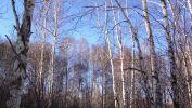 image-et-fonds-ecran-widescreen-arbres-telechargement-gratuit-3