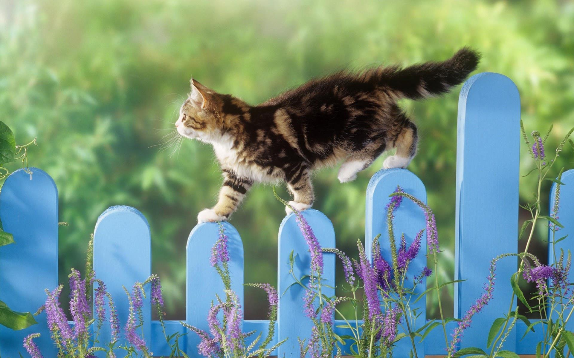 Telecharger ginger le chat qui parle gratuitement