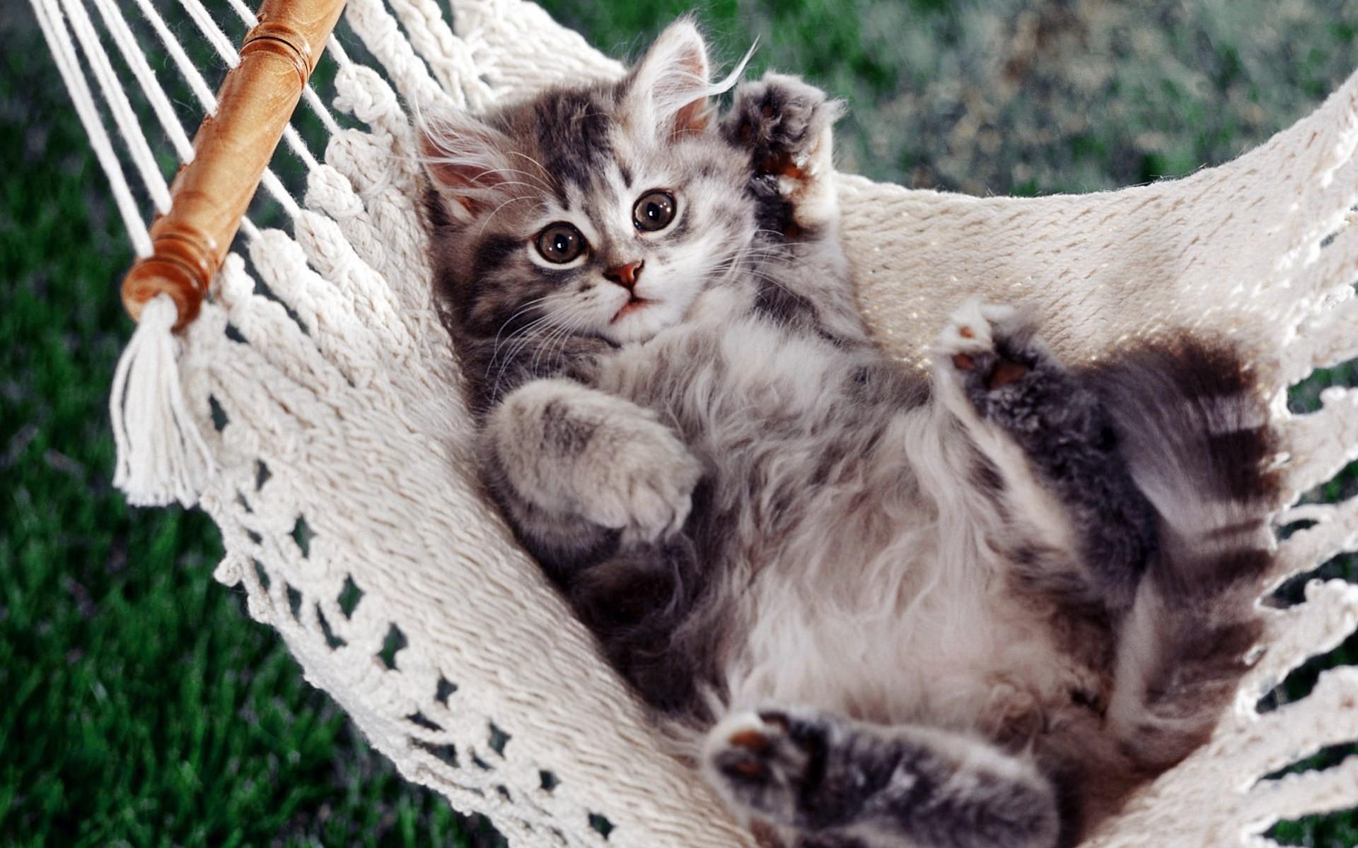 Des chats en fond d 39 cran hd animaux fonds d 39 cran - Chats gratuits ...
