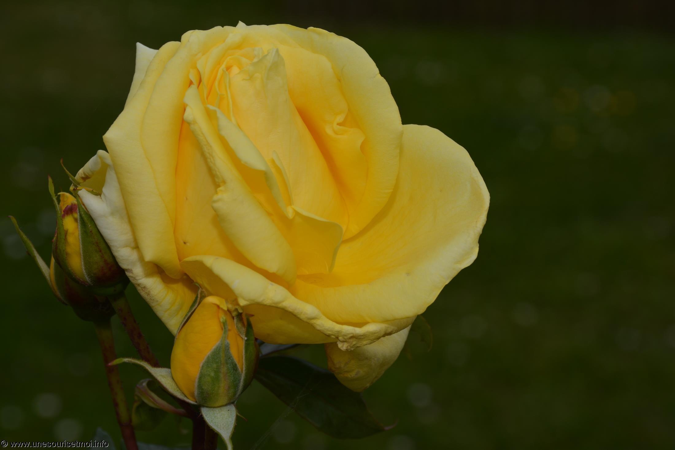 fleurs-ete-printemps-du-jardin-en-grand-format-HD_1