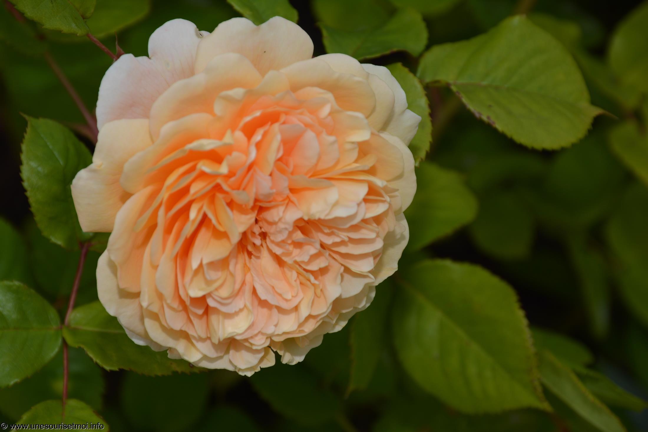 fleurs-ete-printemps-du-jardin-en-grand-format-HD_10