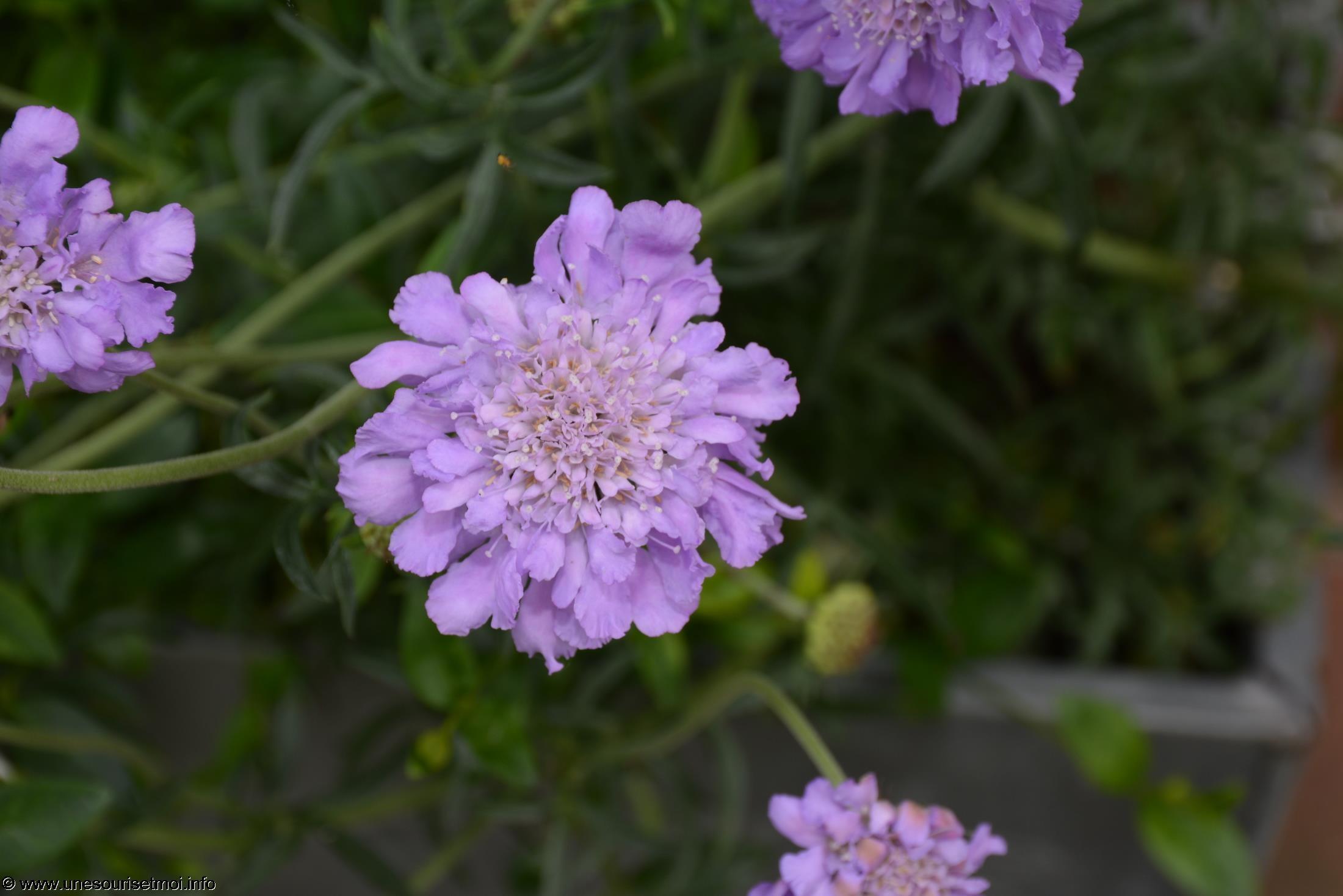 fleurs-ete-printemps-du-jardin-en-grand-format-HD_3