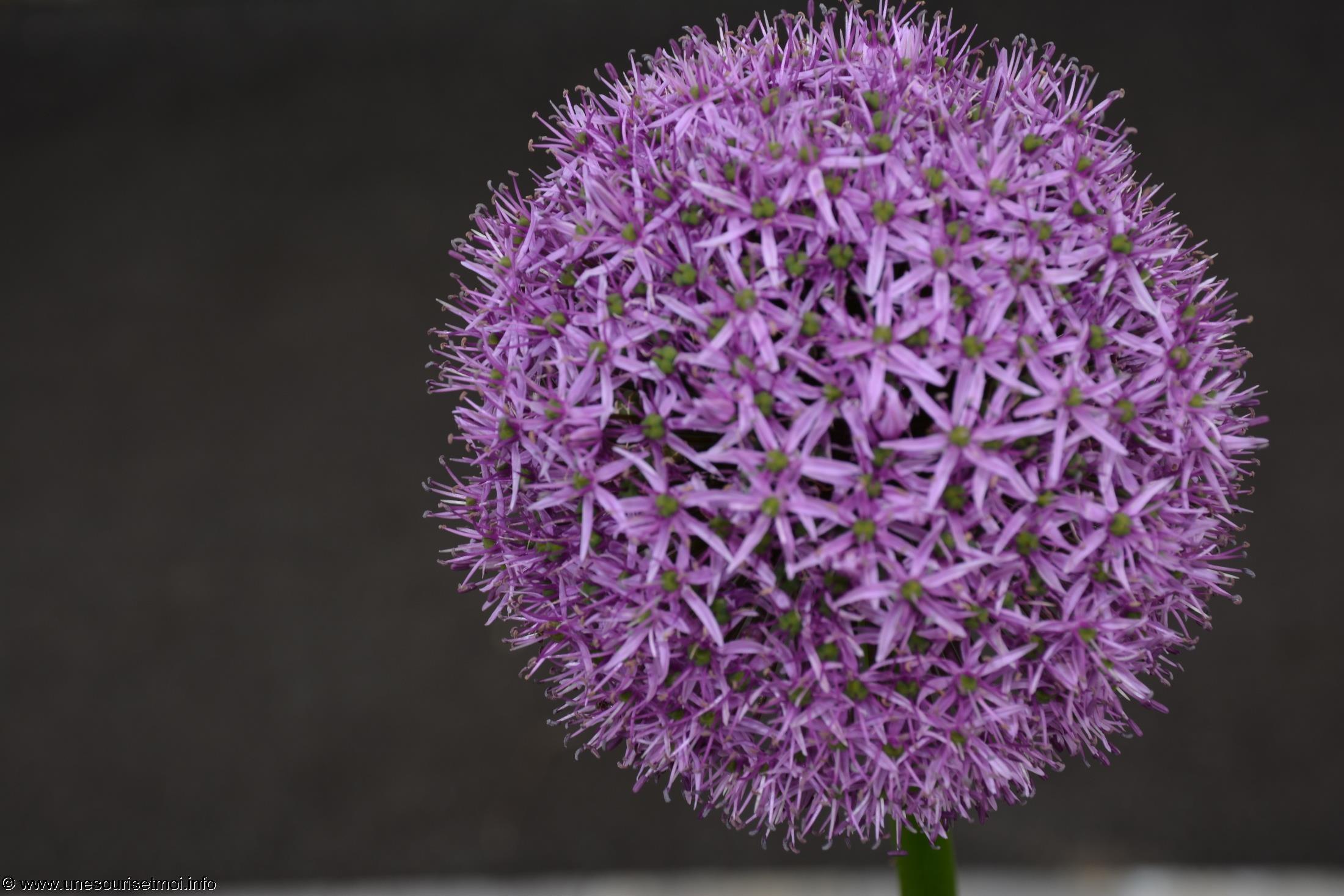fleurs-ete-printemps-du-jardin-en-grand-format-HD_4
