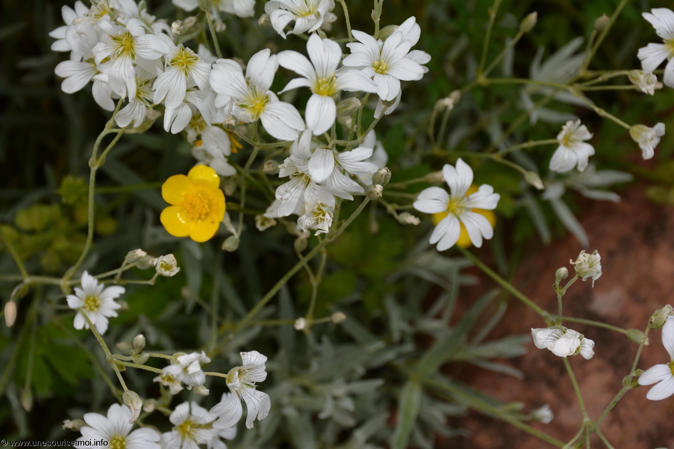 fleurs-ete-printemps-du-jardin-en-grand-format-HD_5