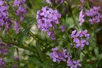fleurs-ete-printemps-du-jardin-en-grand-format-HD_6