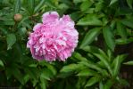 fleurs-ete-printemps-du-jardin-en-grand-format-HD_8