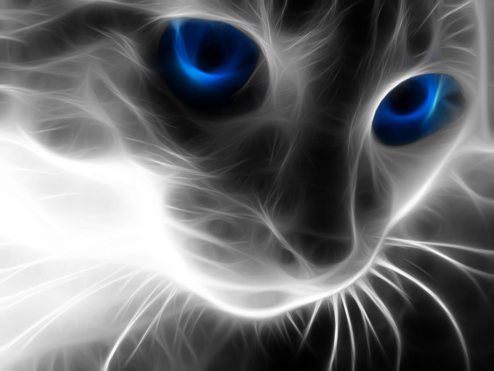 chat-yeux-bleus-fonds-d-ecran-effets-lumiere-et-retouche-photo_04