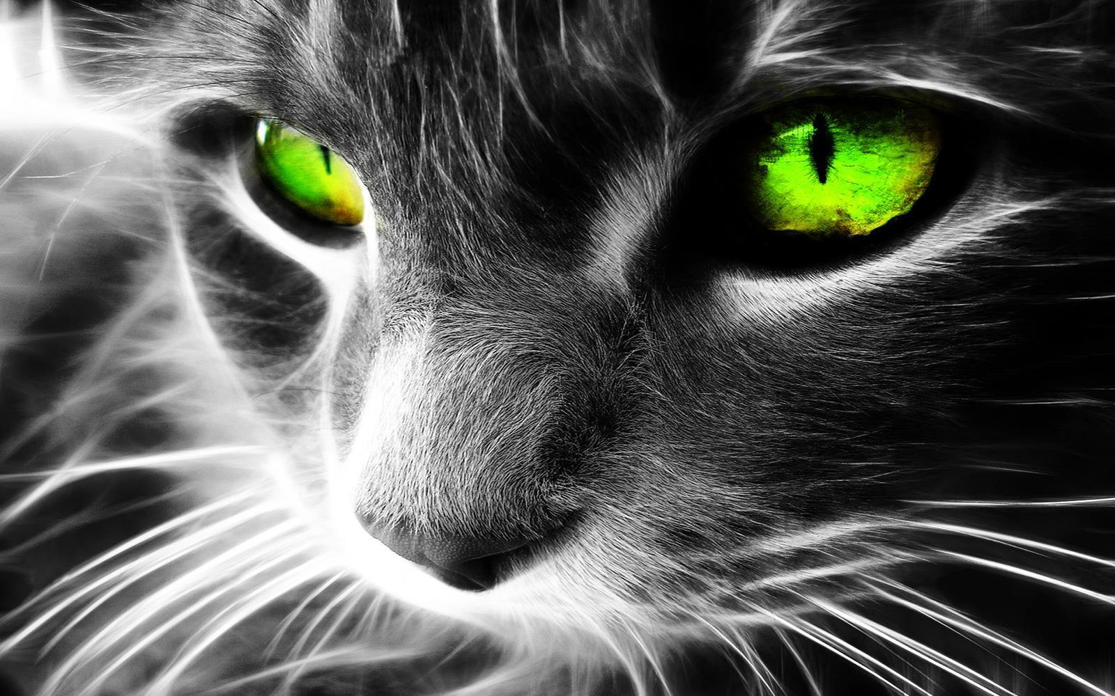 chat-yeux-verts-fonds-d-ecran-effets-lumiere-et-retouche-photo_10