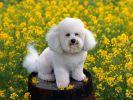 chiens-photographies-telechargement-gratuit-hd_01