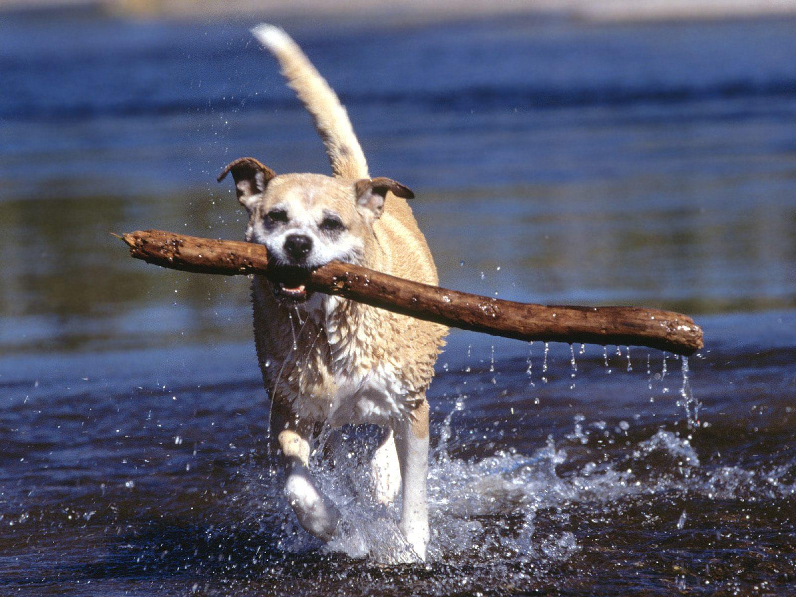 chiens-photographies-telechargement-gratuit-hd_02