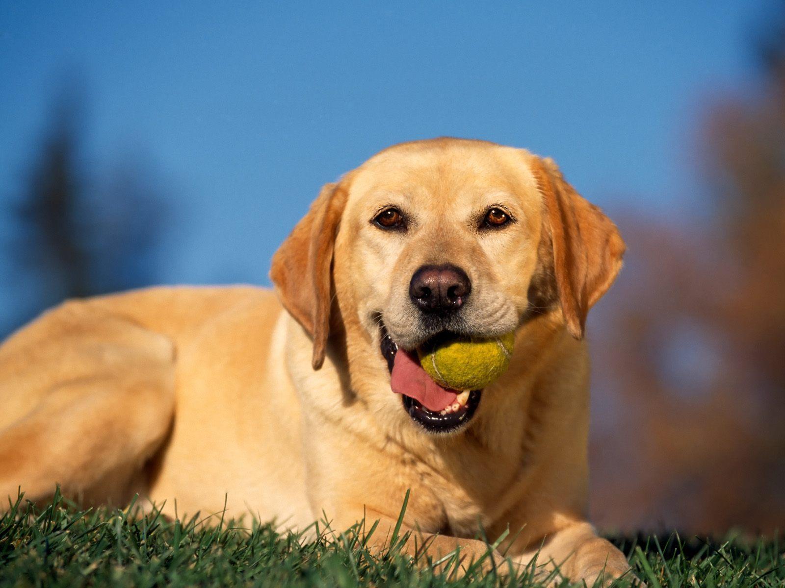 chiens-photographies-telechargement-gratuit-hd_03