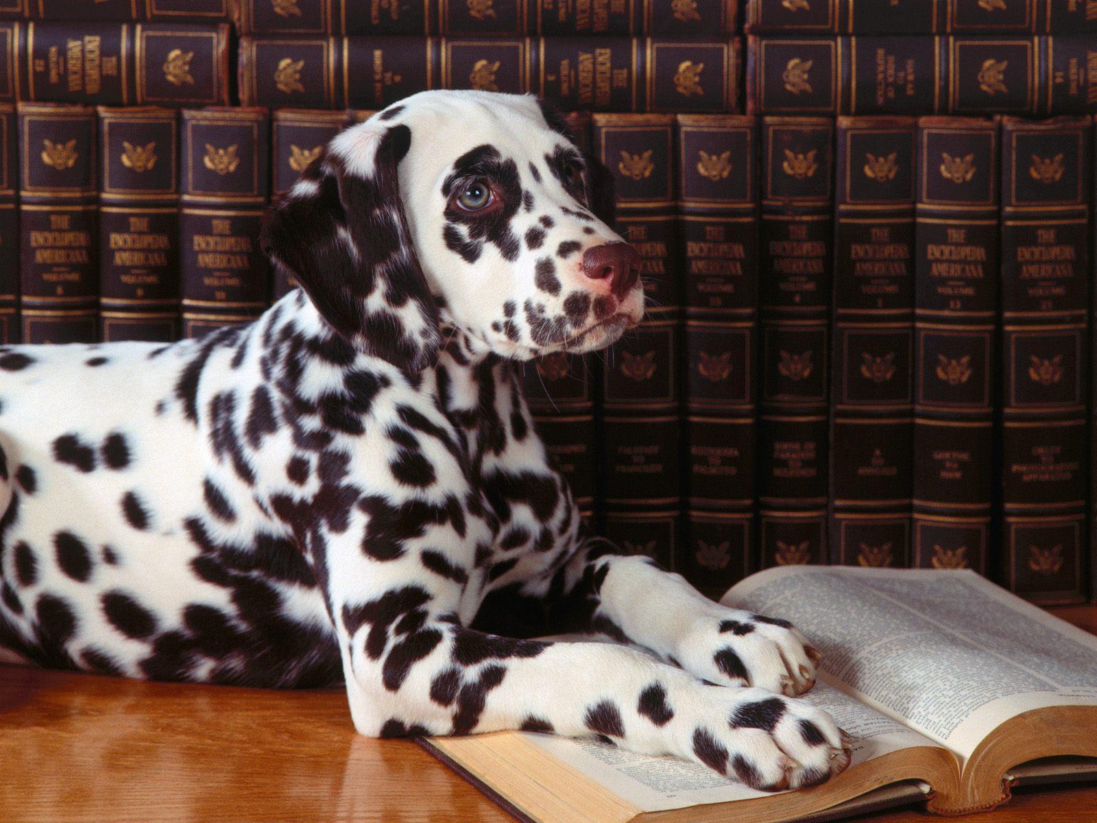chiens-photographies-telechargement-gratuit-hd_05