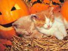 chatons-photos-gratuites-en-telechargement_01