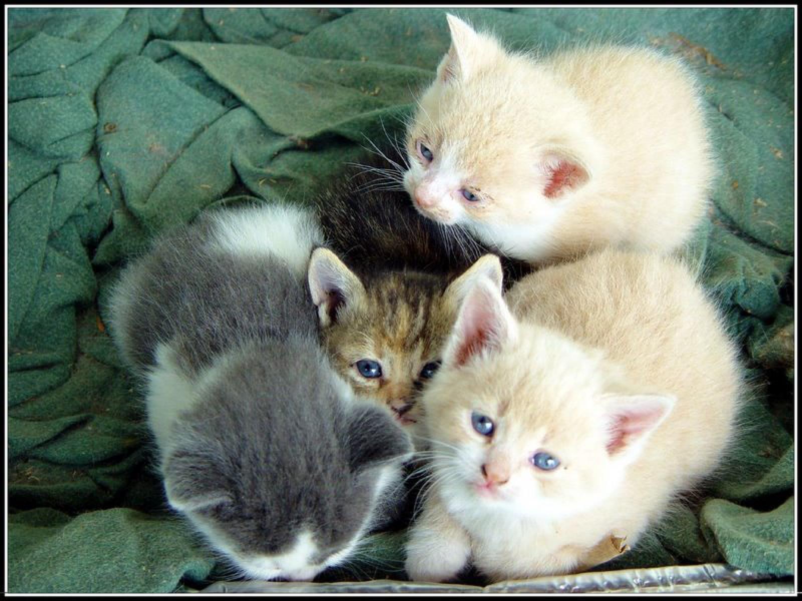 chatons-photos-gratuites-en-telechargement_02