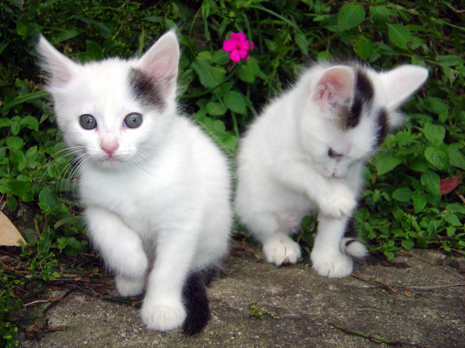chatons-photos-gratuites-en-telechargement_03