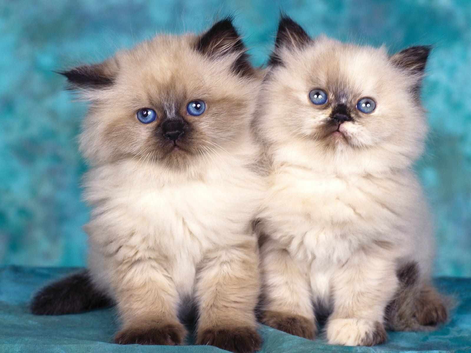 chatons-photos-gratuites-en-telechargement_04