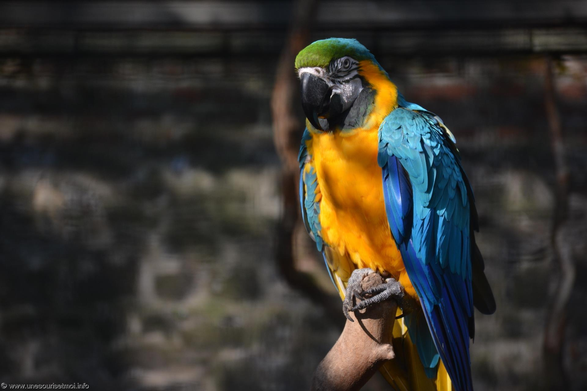 ara_fonds-ecran-gratuits_photos-oiseaux_05
