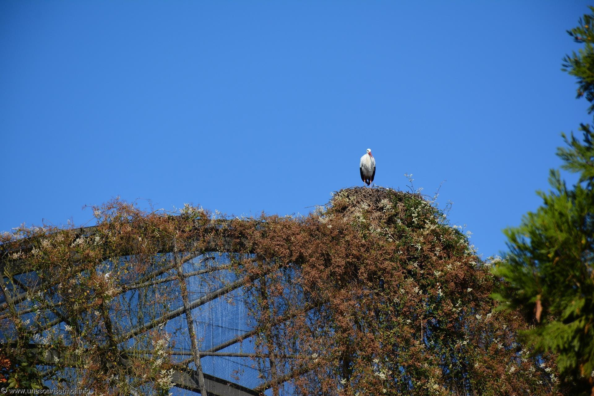 cigogne_fonds-ecran-gratuits_photos-oiseaux_10