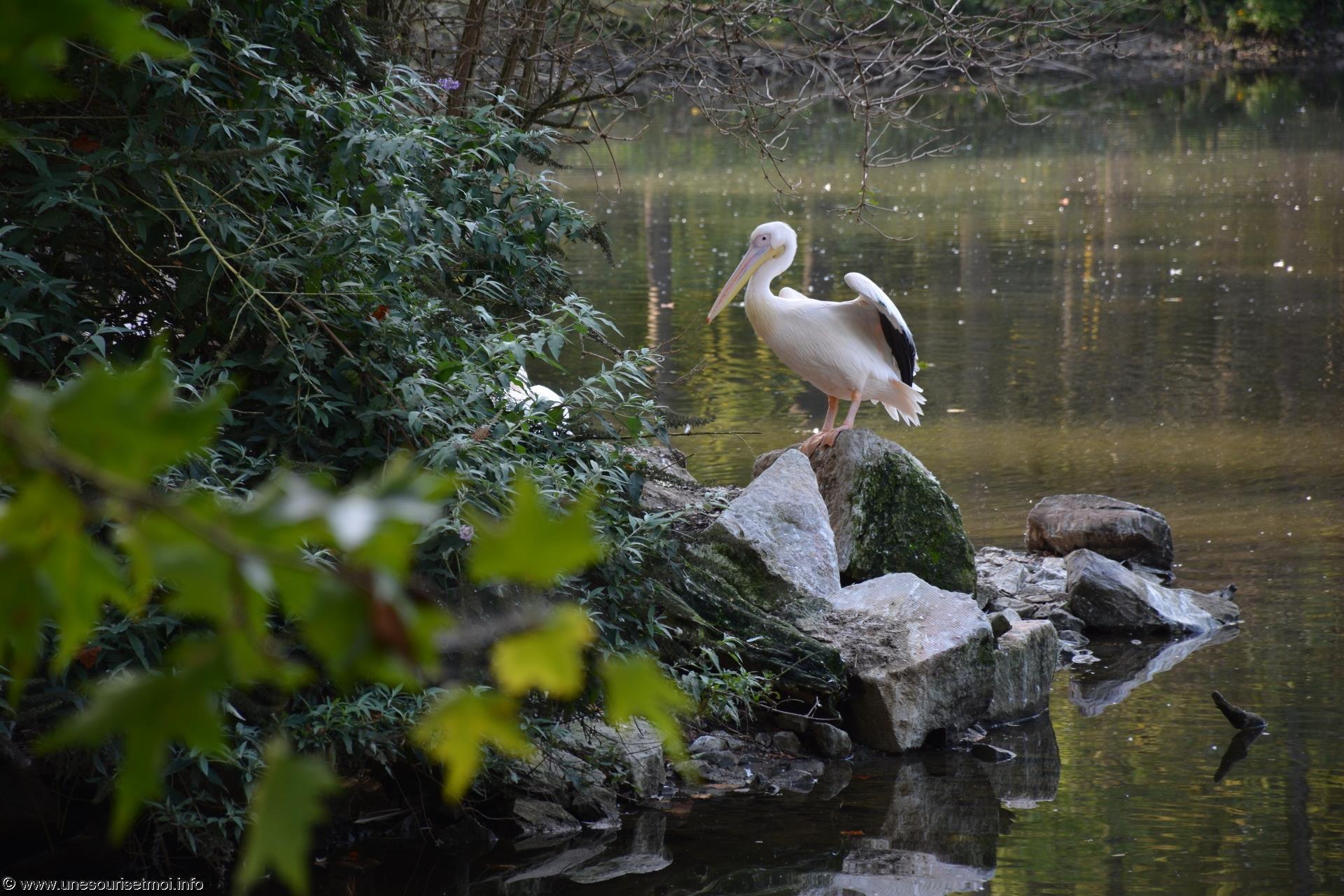 cormoran_fonds-ecran-gratuits_photos-oiseaux_14