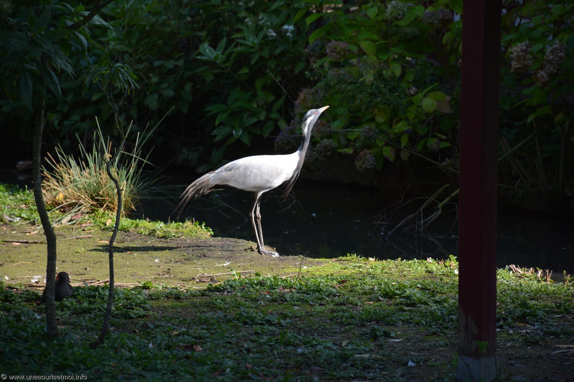 fonds-ecran-gratuits_photos-oiseaux_11