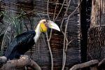 gros-bec_fonds-ecran-gratuits_photos-oiseaux_02