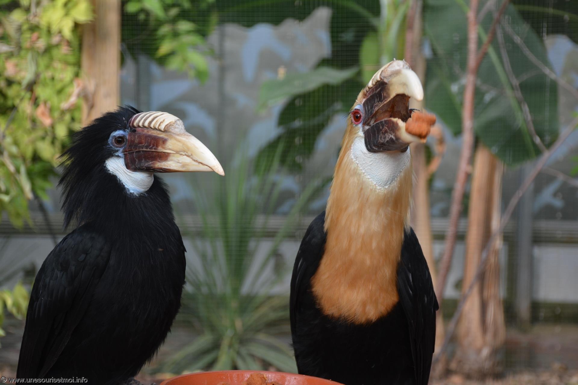 le-repas_fonds-ecran-gratuits_photos-oiseaux_01