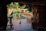 promenade_fonds-ecran-gratuits_photos-oiseaux_03