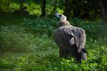 vautour_fonds-ecran-gratuits_photos-oiseaux_20