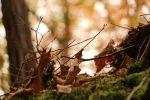 automne-montages-photos-avec-des-feuilles_1